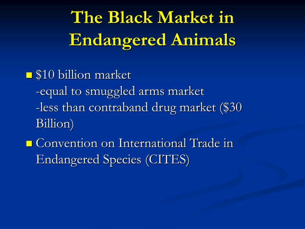 The Black Market in