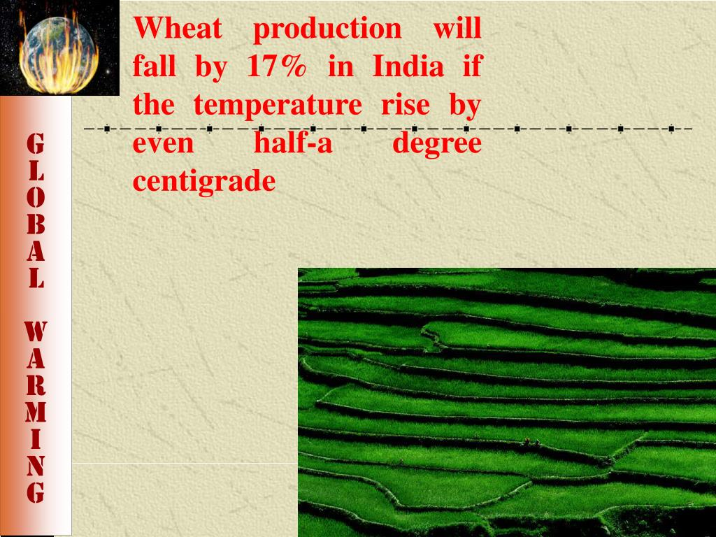 Wheat production will fall by 17% in India if the temperature rise by even half-a degree centigrade