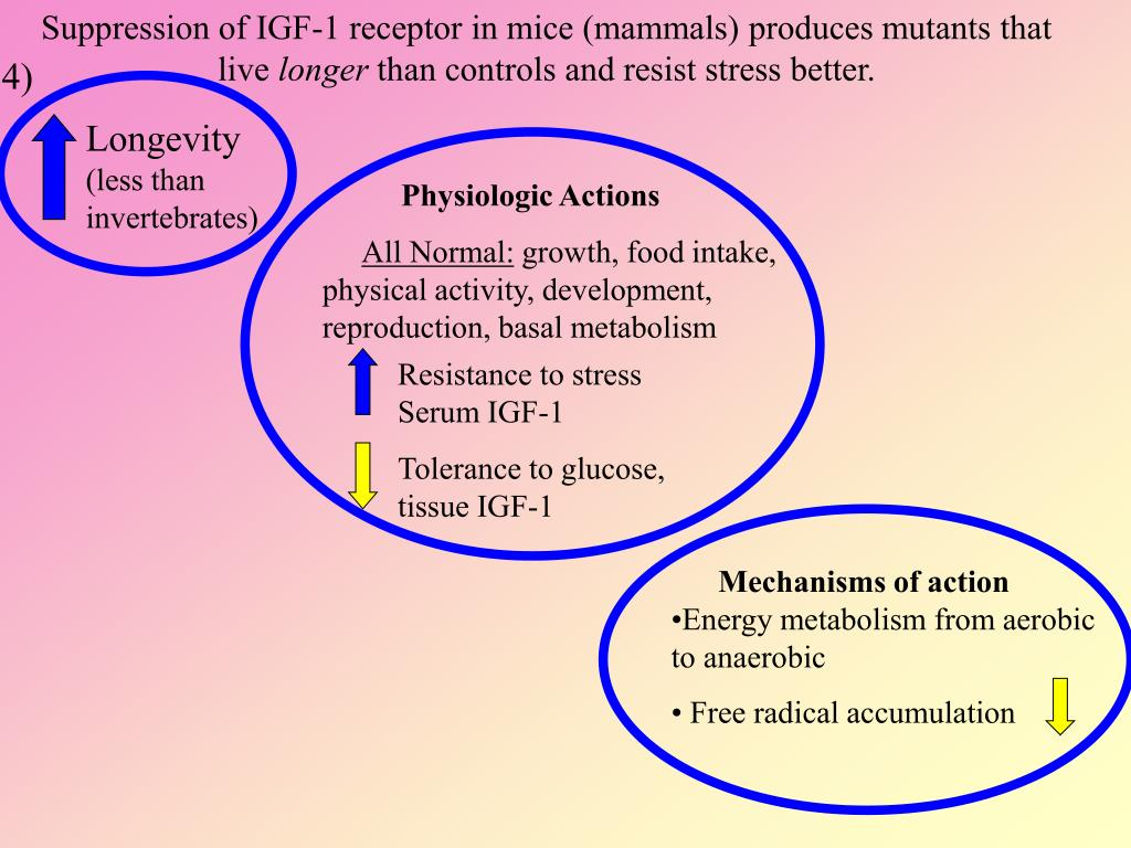 Suppression of IGF-1 receptor in mice (mammals) produces mutants that live
