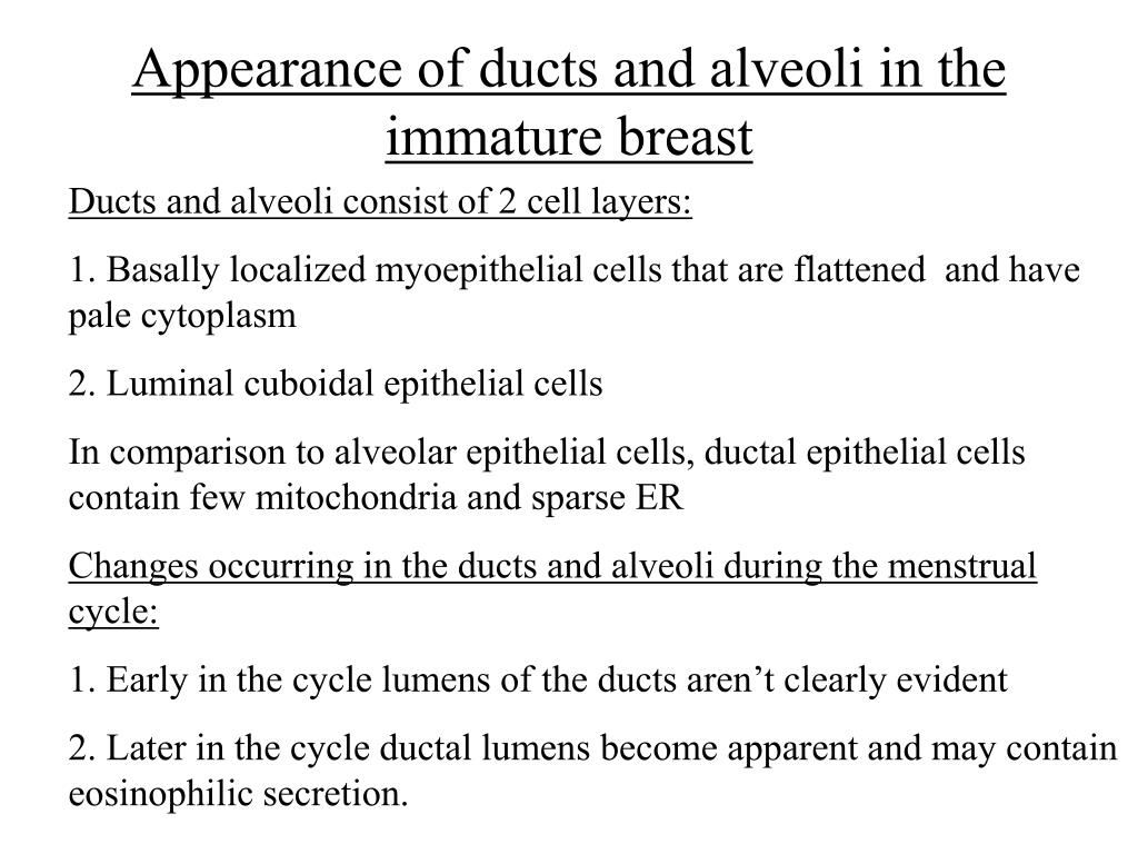 Appearance of ducts and alveoli in the immature breast