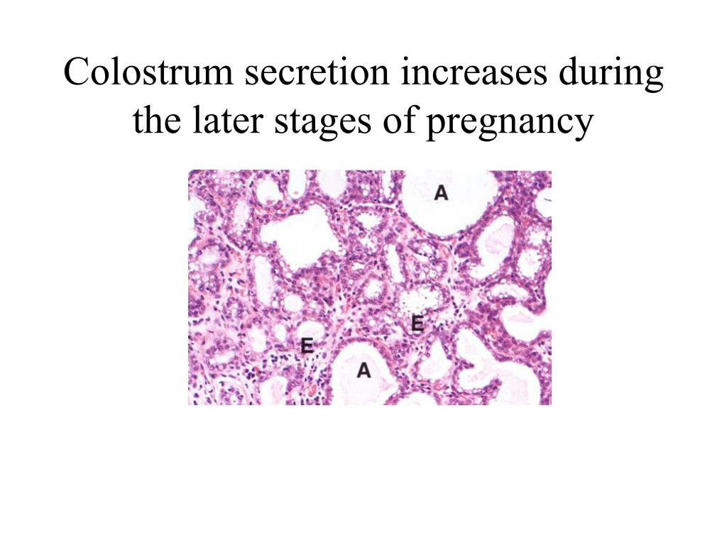 Colostrum secretion increases during the later stages of pregnancy