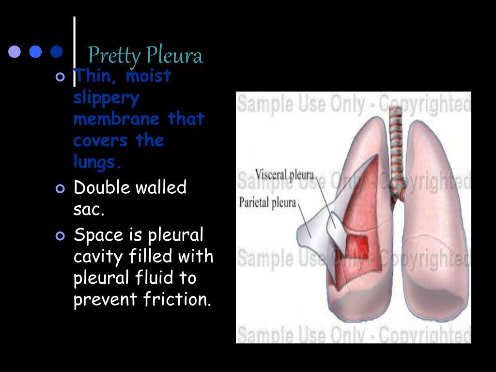 Pretty Pleura