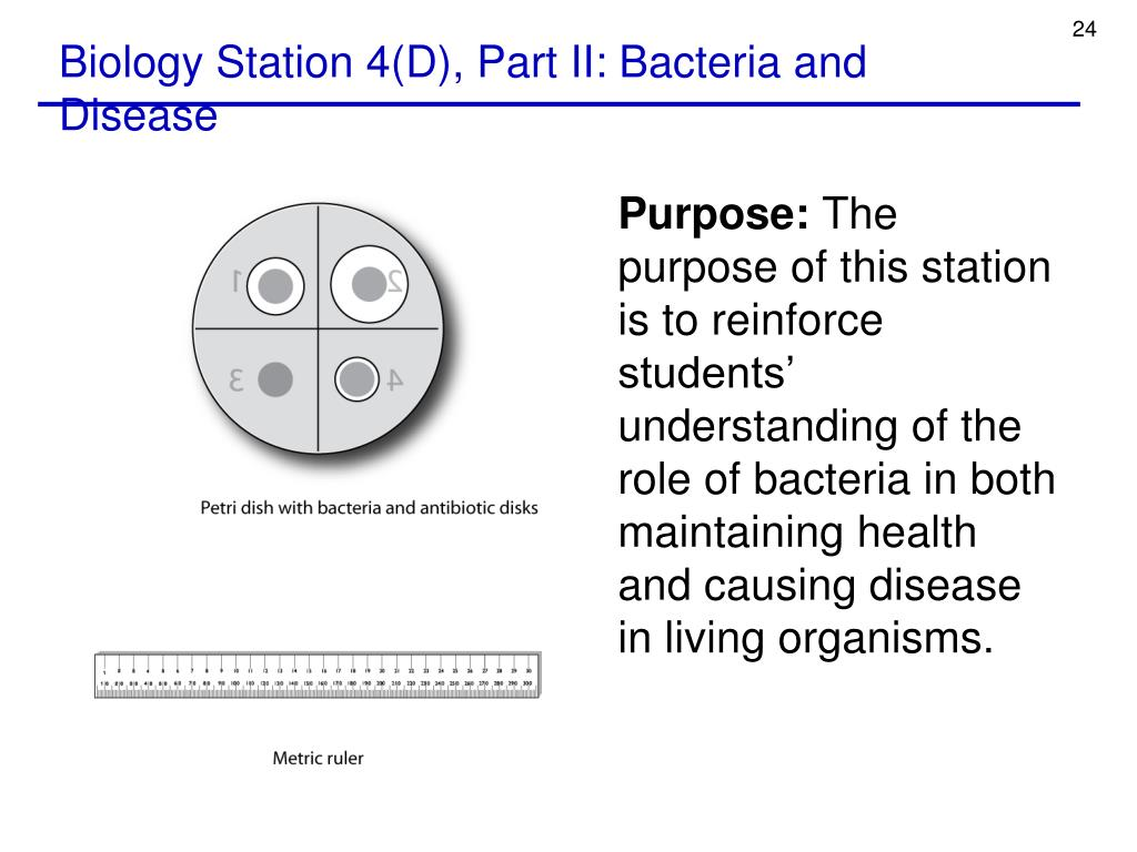 Biology Station 4(D), Part II: Bacteria and Disease