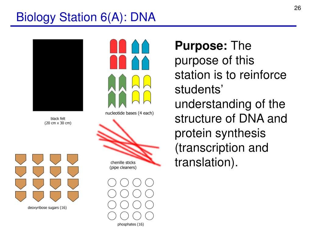 Biology Station 6(A): DNA