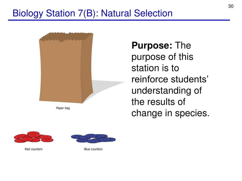 Biology Station 7(B): Natural Selection