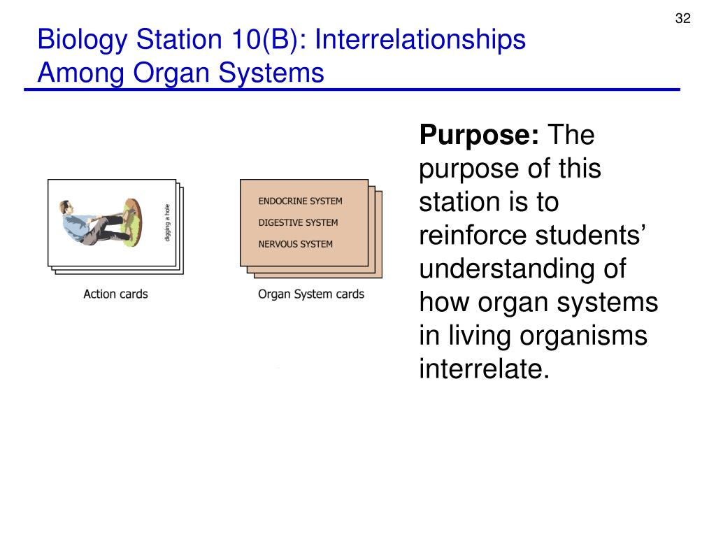 Biology Station 10(B): Interrelationships Among Organ Systems