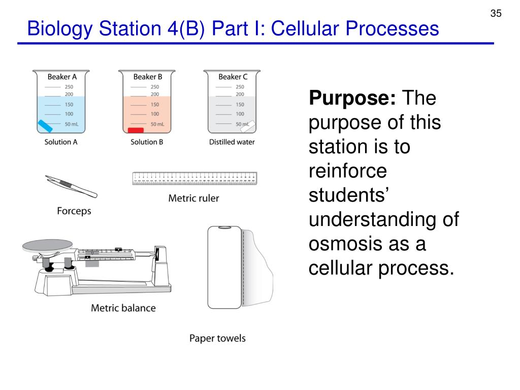 Biology Station 4(B) Part I: Cellular Processes
