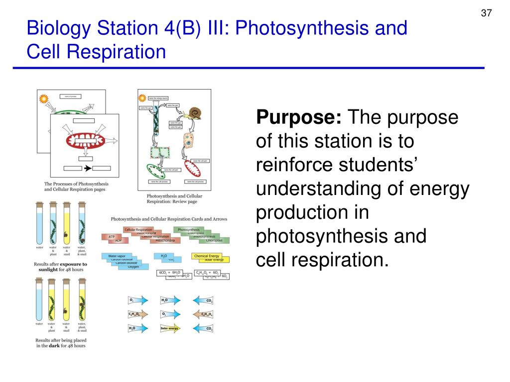 Biology Station 4(B) III: Photosynthesis and Cell Respiration