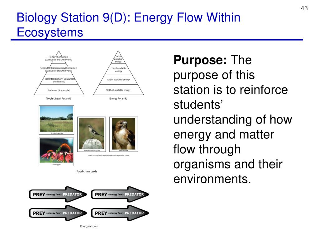 Biology Station 9(D): Energy Flow Within Ecosystems