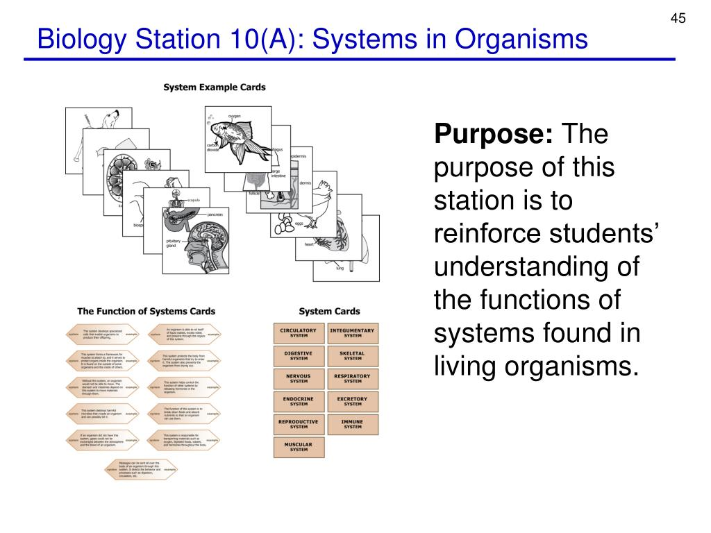 Biology Station 10(A): Systems in Organisms