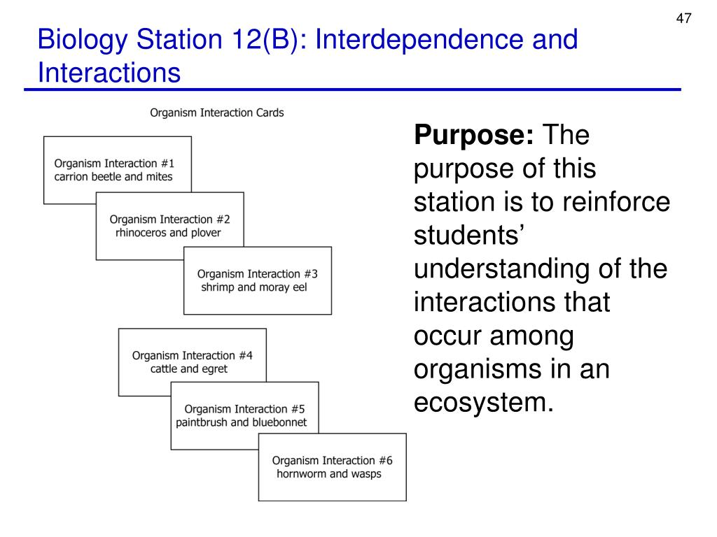 Biology Station 12(B): Interdependence and Interactions