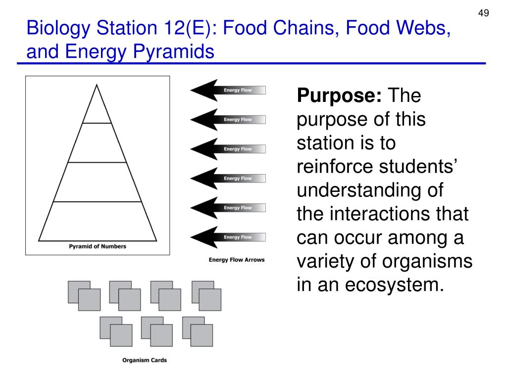 Biology Station 12(E): Food Chains, Food Webs, and Energy Pyramids