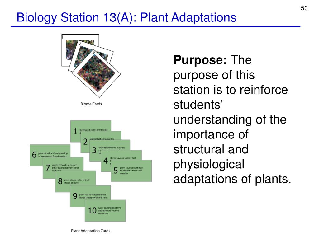 Biology Station 13(A): Plant Adaptations