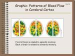 graphic patterns of blood flow in cerebral cortex
