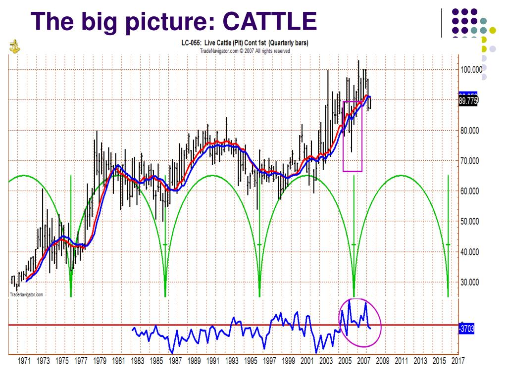 The big picture: CATTLE