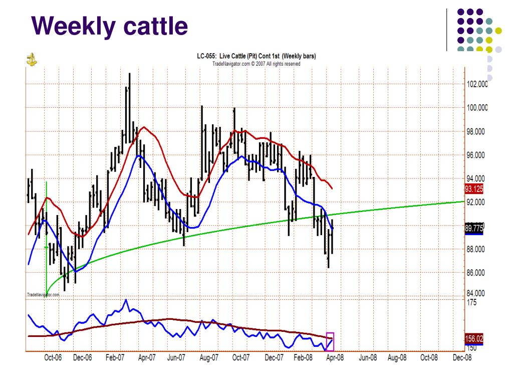 Weekly cattle