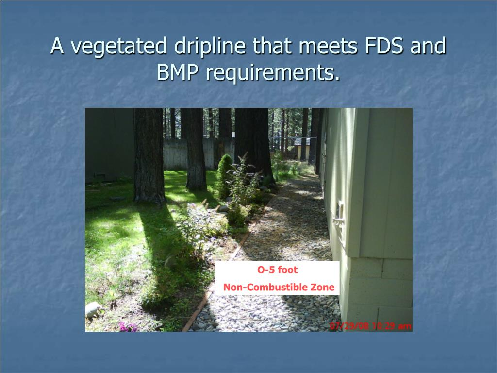 A vegetated dripline that meets FDS and BMP requirements.