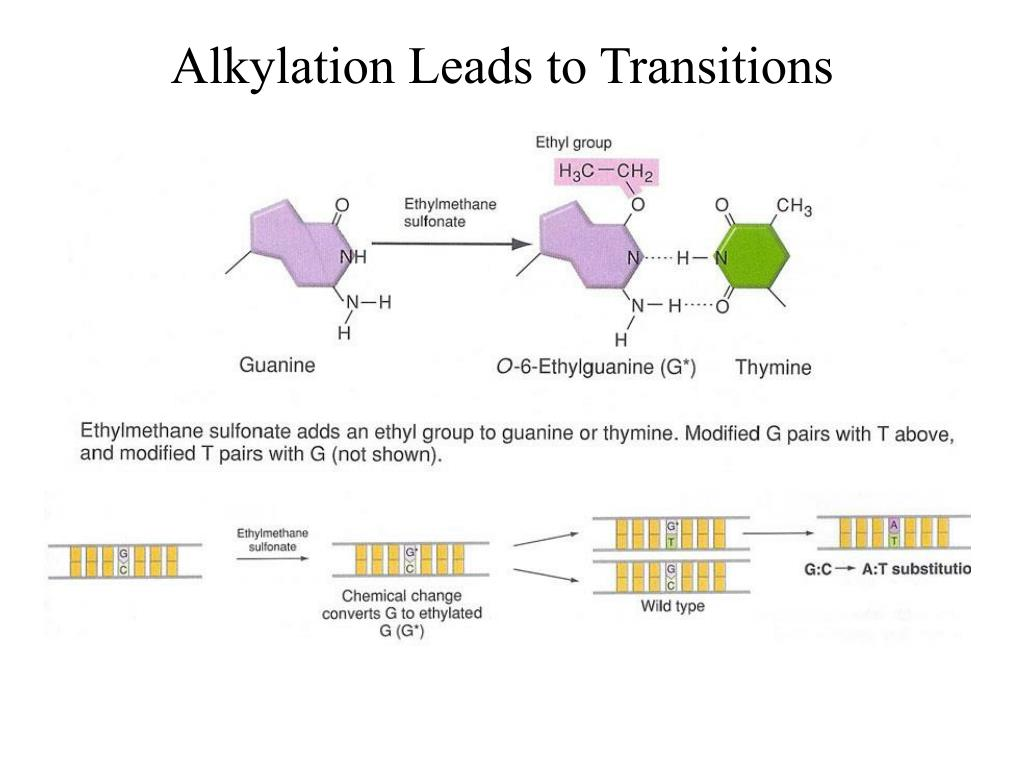 Alkylation Leads to Transitions