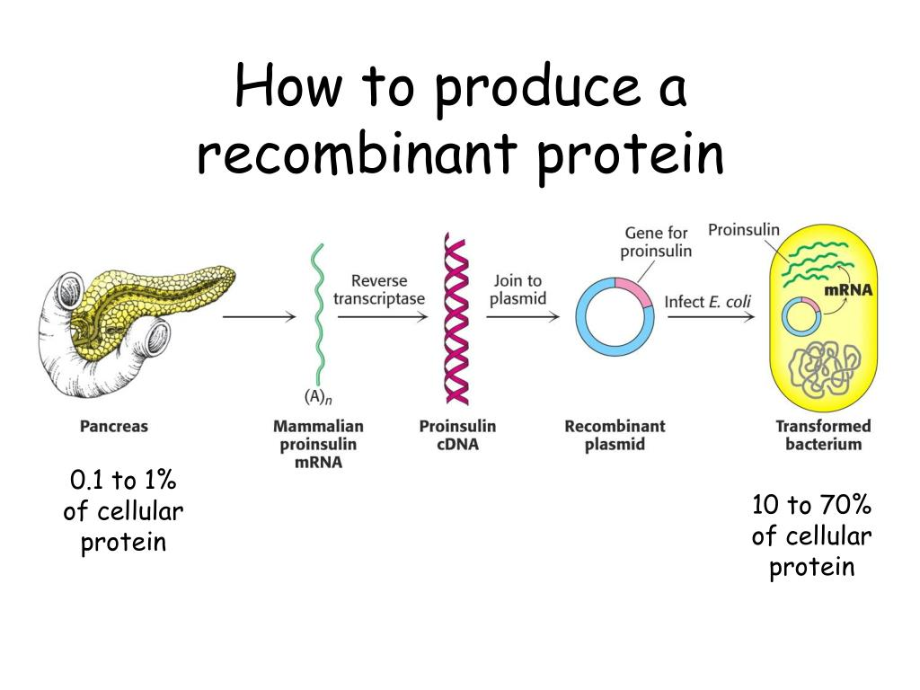 How to produce a recombinant protein