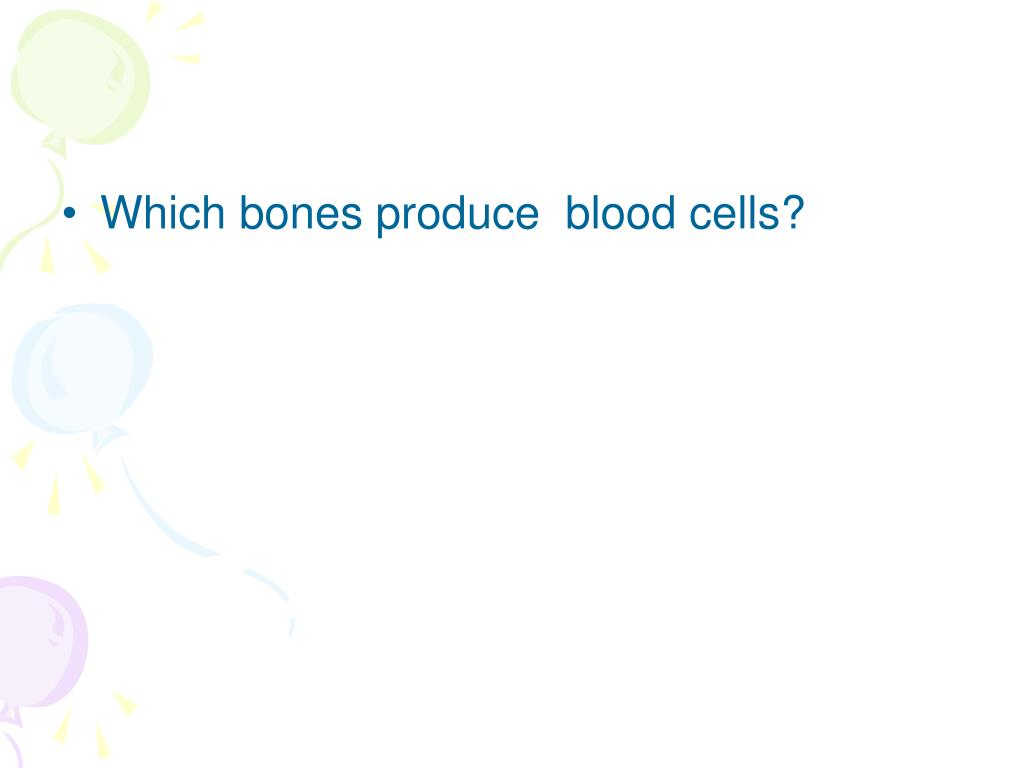 Which bones produce  blood cells?
