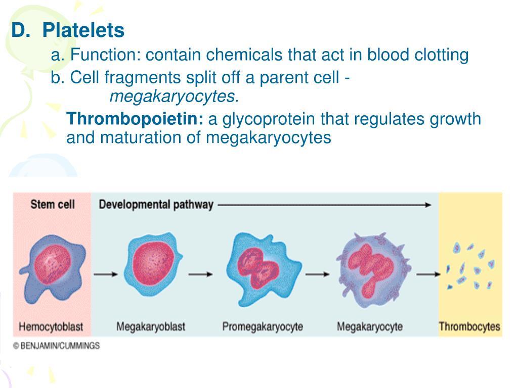D.  Platelets