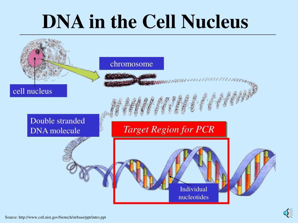 Target Region for PCR