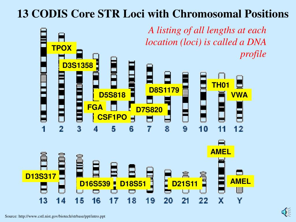 13 CODIS Core STR Loci with Chromosomal Positions