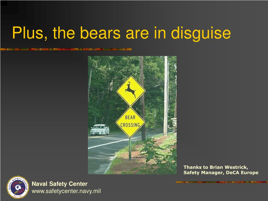 Plus, the bears are in disguise
