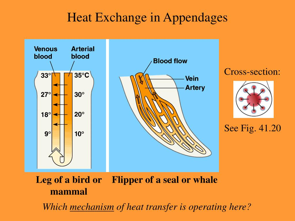 Heat Exchange in Appendages