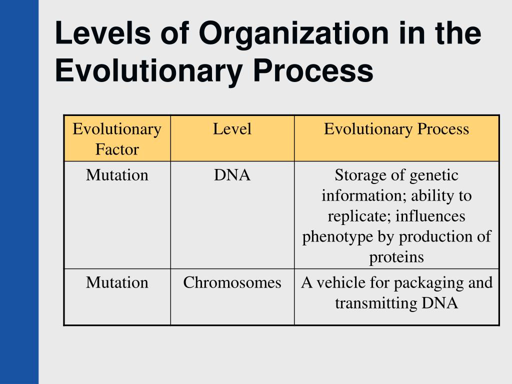 Levels of Organization in the Evolutionary Process