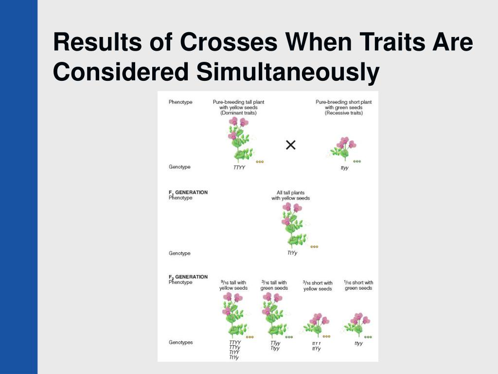 Results of Crosses When Traits Are Considered Simultaneously
