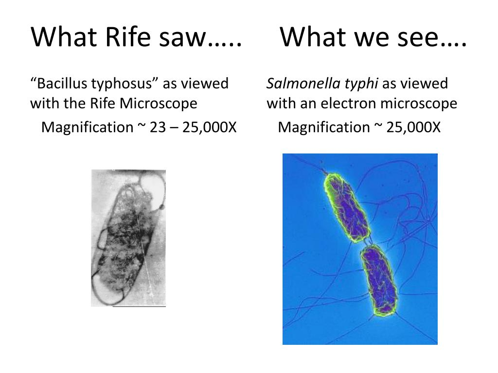 What Rife saw…..	What we see….