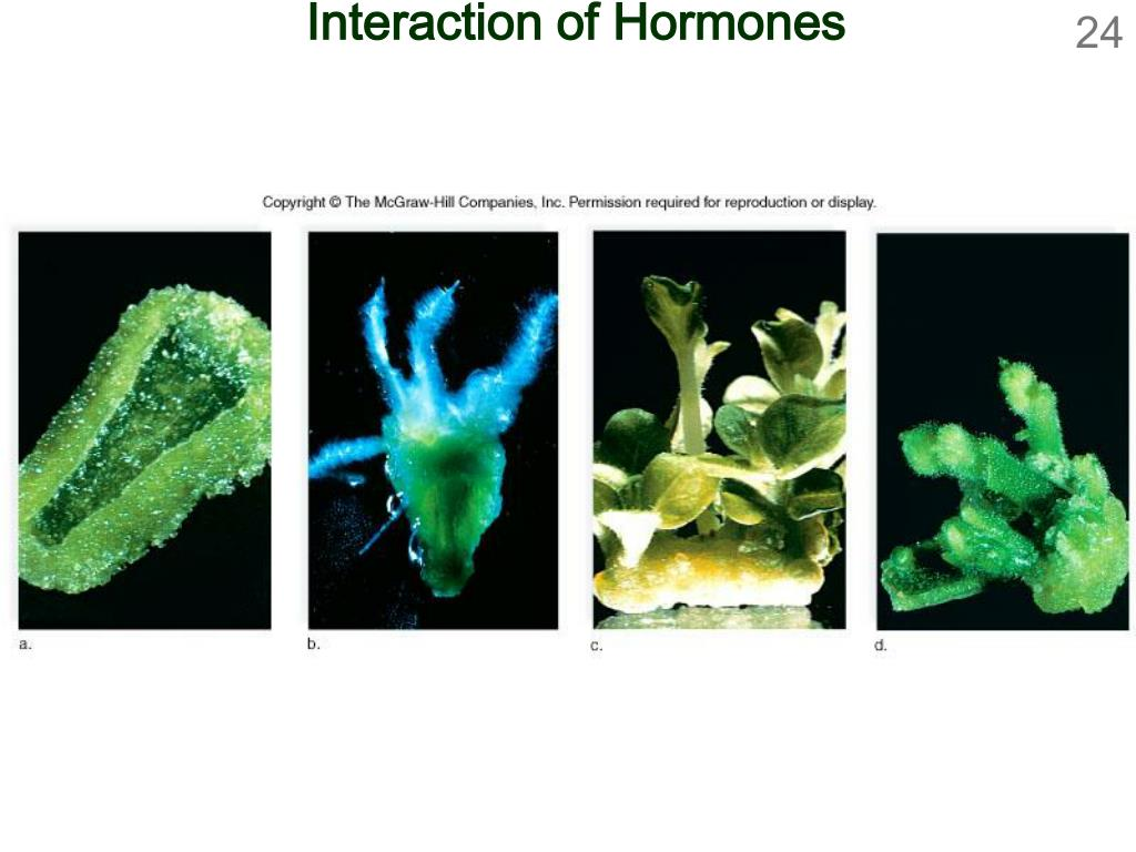 Interaction of Hormones