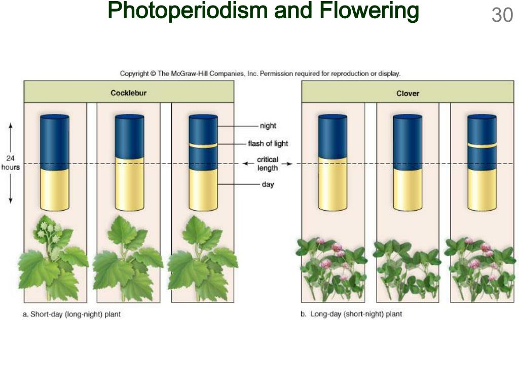 Photoperiodism and Flowering