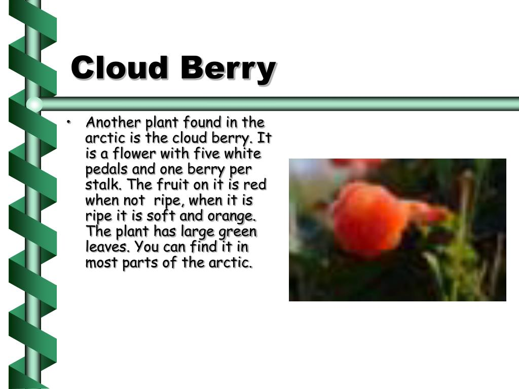 Cloud Berry
