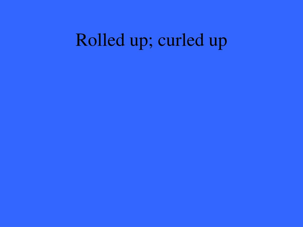 Rolled up; curled up