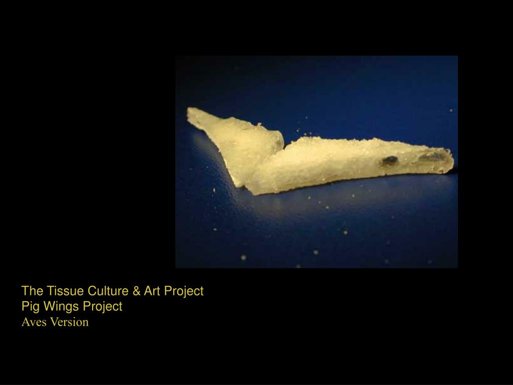 The Tissue Culture & Art Project