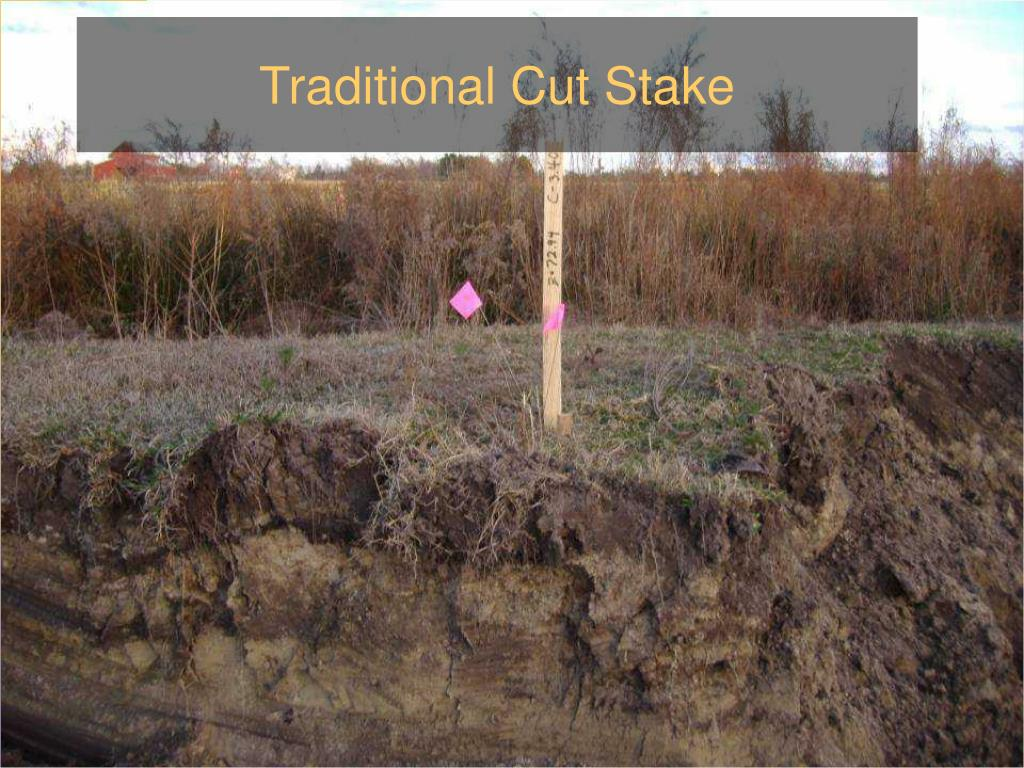 Traditional Cut Stake