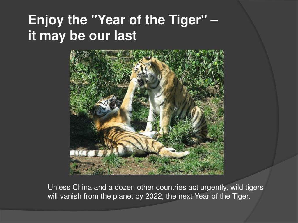 "Enjoy the ""Year of the Tiger"" –"
