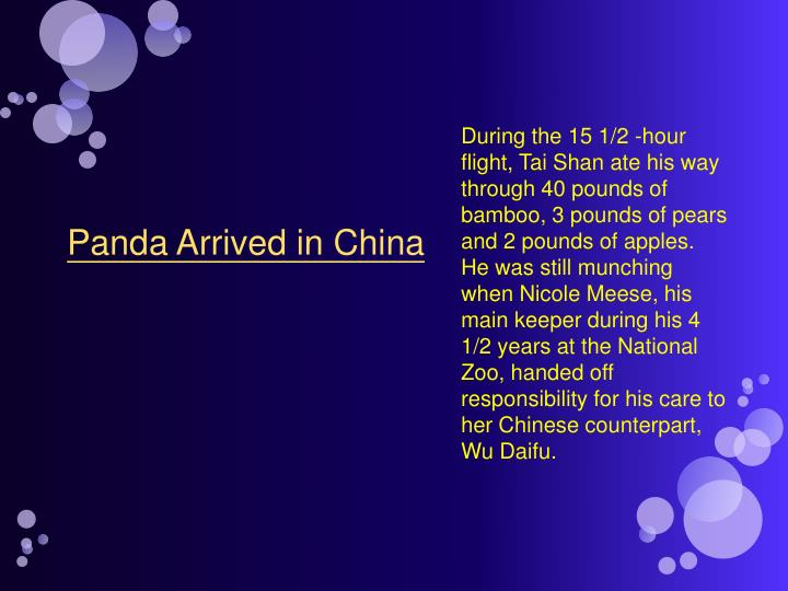 During the 15 1/2 -hour flight, Tai Shan ate his way through 40 pounds of bamboo, 3 pounds of pears ...