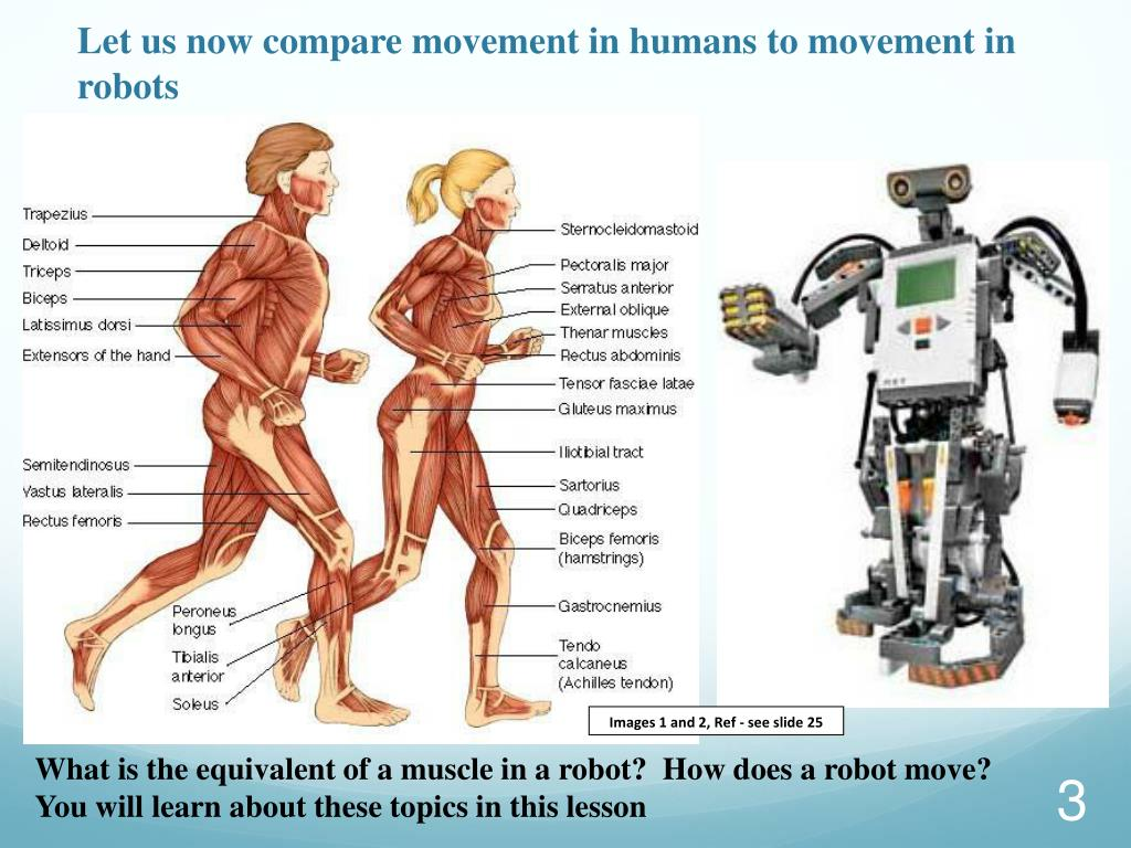 Let us now compare movement in humans to movement in robots