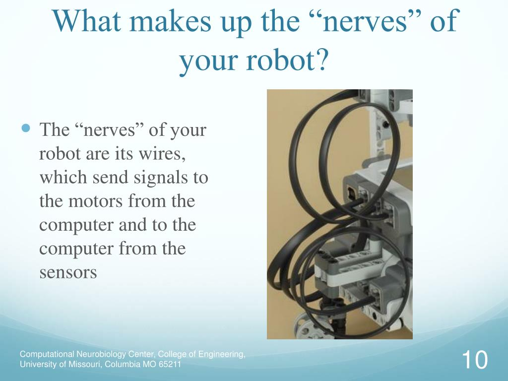 "What makes up the ""nerves"" of your robot?"