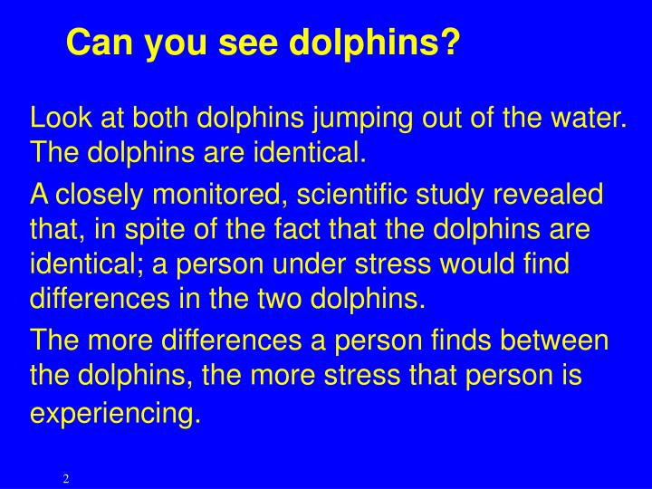 Can you see dolphins