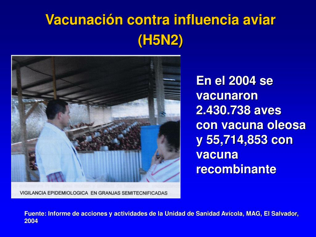 Vacunación contra influencia aviar (H5N2)