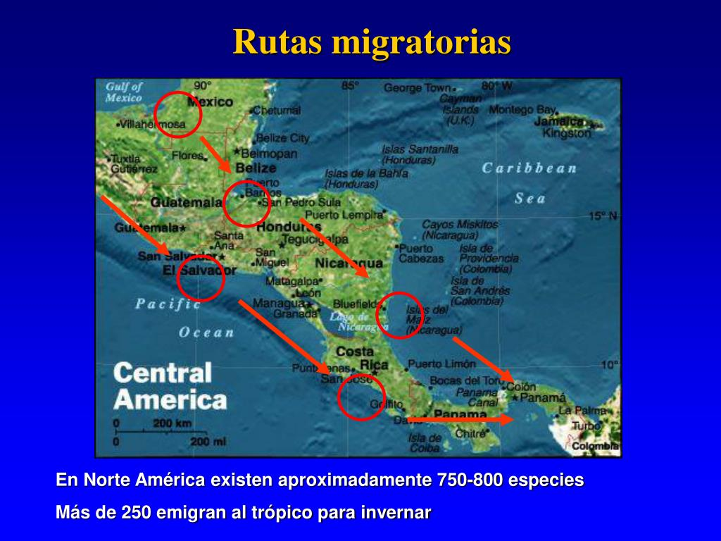 Rutas migratorias