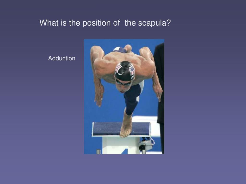 What is the position of  the scapula?