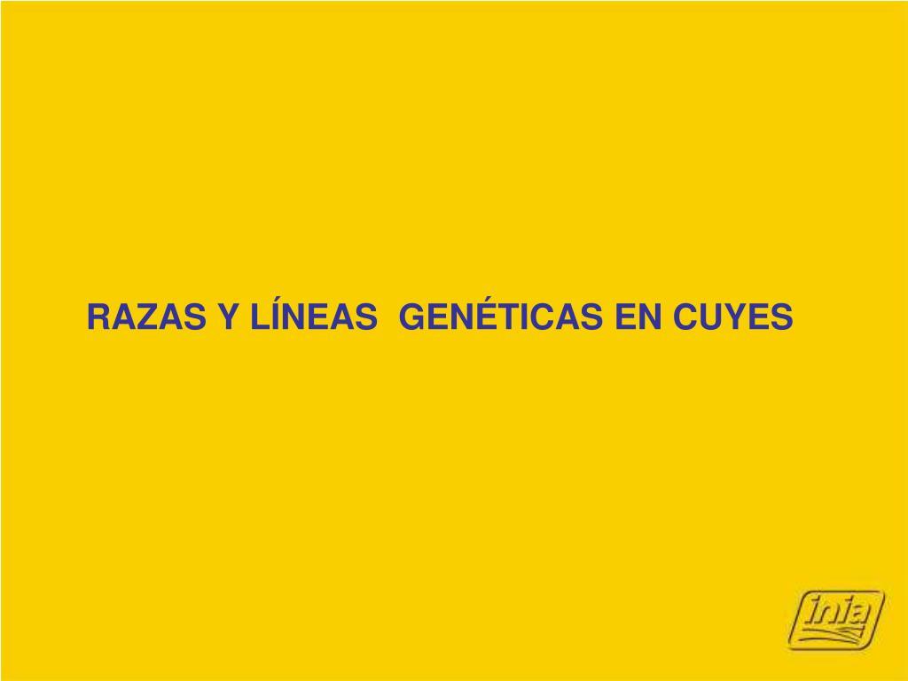 RAZAS Y LÍNEAS  GENÉTICAS EN CUYES