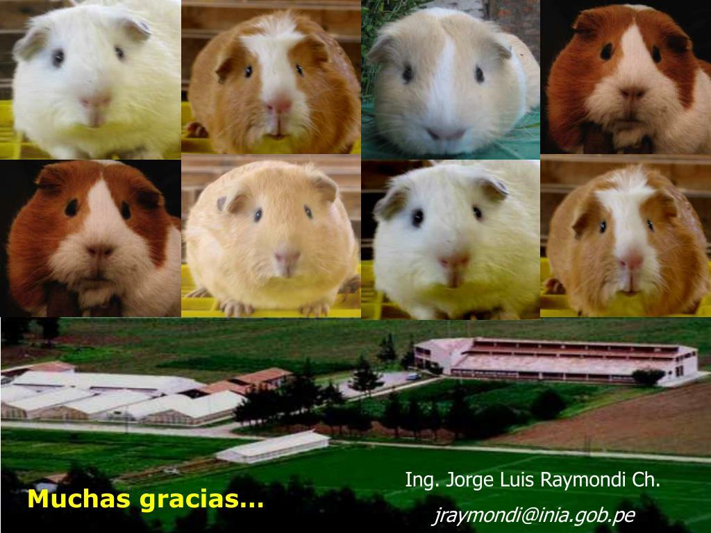 Ing. Jorge Luis Raymondi Ch.