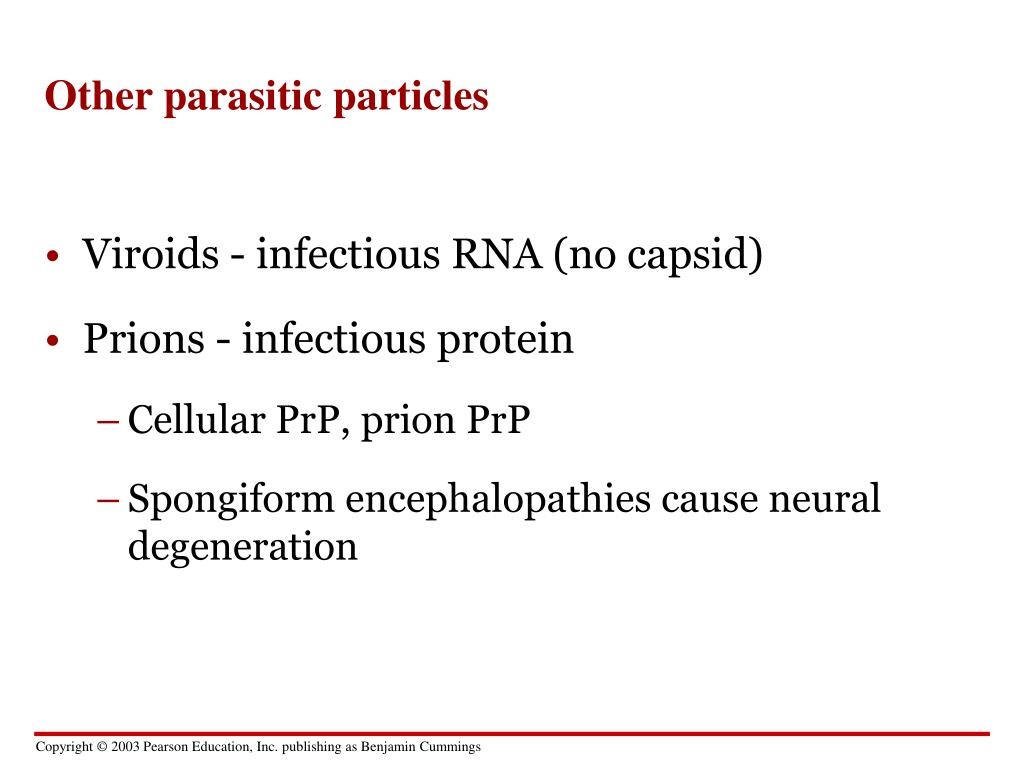 Other parasitic particles