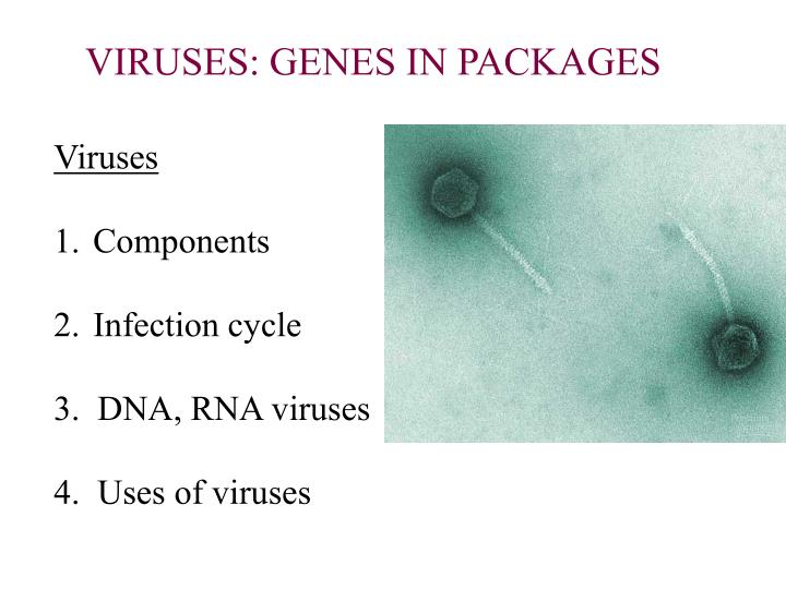 VIRUSES: GENES IN PACKAGES